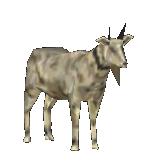 Goat JPOG