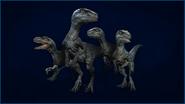 JWE RSSC raptors 1920x1080