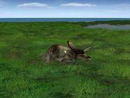 JPOG Torosaurus