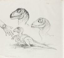 Raptor baby art