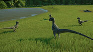 A conversation between raptors