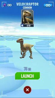 Raptor1212
