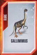 Galli-0