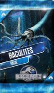 Baculites Pack