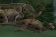 Jurassic-park-3-corythosaurus