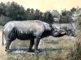 Subhyracodon