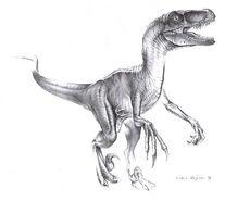 Raptor pastorivelolarge