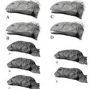 Dimorphodon Head Designs