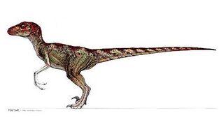 Raptorsw10