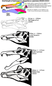 Spinosaurus skull length