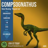 Compsognathus DPG