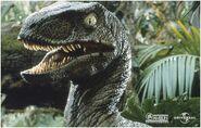 Velociraptor pose 2