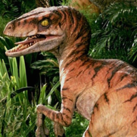 Velociraptor v1 Male Crop-300x300