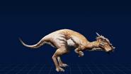 DracorexWebsite