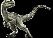 Velociraptor-info-graphic