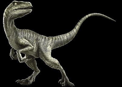 velociraptor jurassic park wiki fandom powered by wikia
