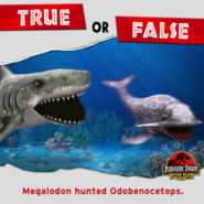True or False Megalodon hunted Ododenocetops