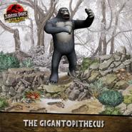 The Gigantopithecus
