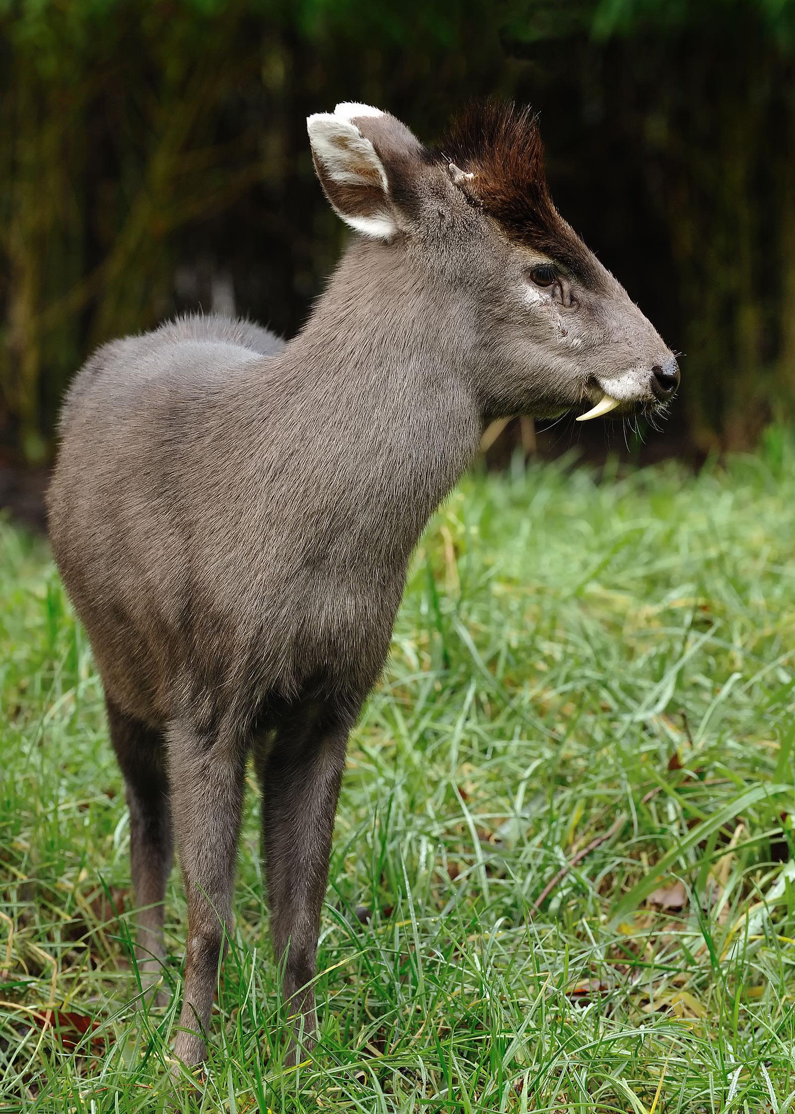 nublar tufted deer jurassic park wiki fandom powered by wikia
