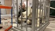 Baby Nasutoceratops animatronic in a cage.jpg