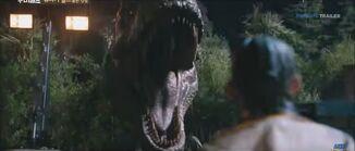 Rex chase2