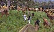 Stampeding herd of hadrosaurs