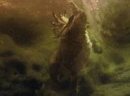 Mystery Ceratopsian Water