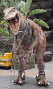 Raptor zulu
