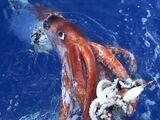Calamar Colosal