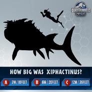 Xiphactinus Size Trivia