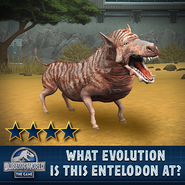 Entelodon Evolution Quiz