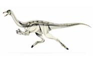 JPI Archaeornithomimus