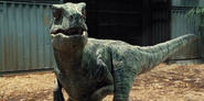 Jurassic-World-Velociraptors-6