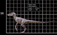 800x488 Velociraptor male size chart