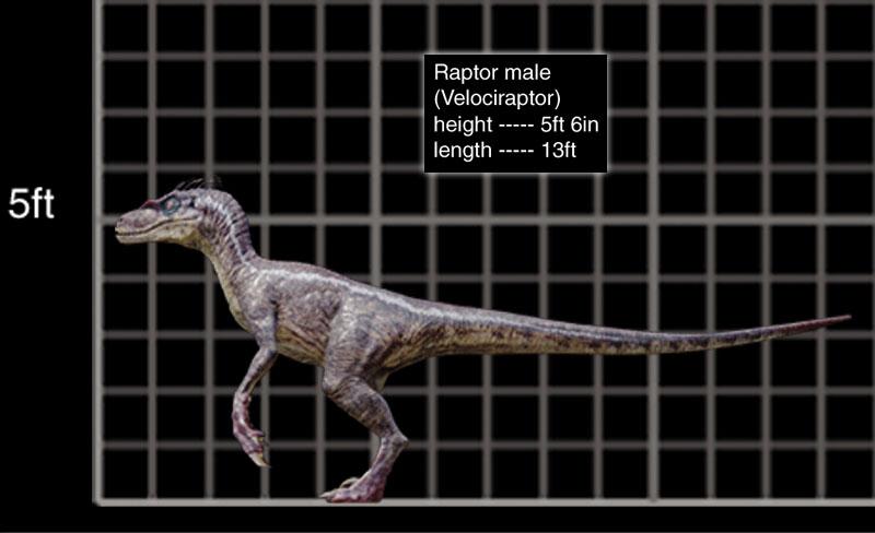 Velociraptor Movie Canon Jurassic Park Wiki Fandom Powered By