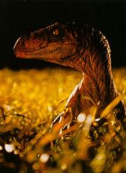 Velociraptor Grasfeld
