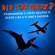 Pteranodon's crest helped it steer