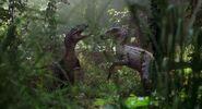 JP3 raptors