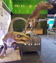 Raptor kit