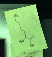 Solution Lysine