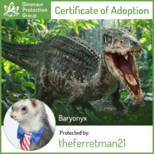 Ferret Adopted