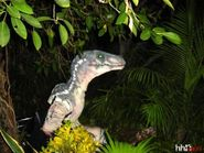 Raptor horror nights
