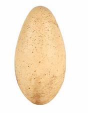 Яйцораптороввпарке3