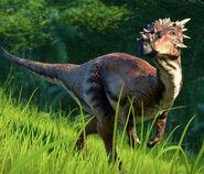 DracorexMain (1)