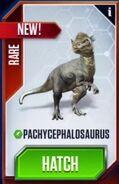 Pachycephalosaurus (28)