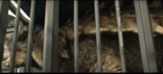 Ankylosaurs in trunck