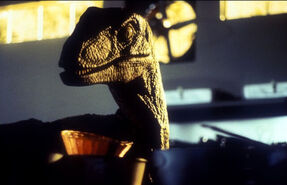 Raptor 68bdb7a0