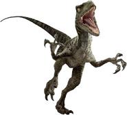 Raptor Render edited