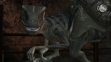Scarred-raptor-leader-jptg 10