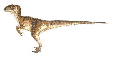 Raptor female